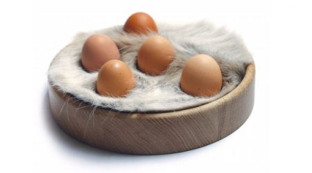 support-oeufs