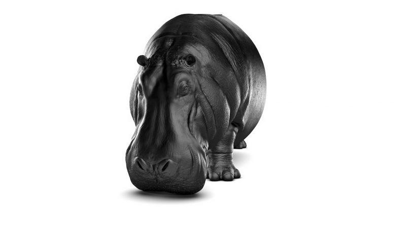 canape-hippopotame-4